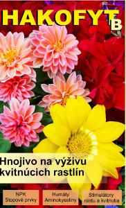 Hakofyt B - kvety