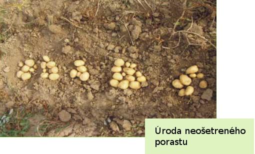 Neošetrené zemiaky